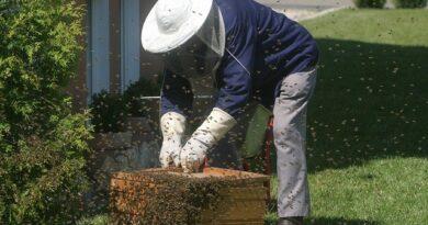 criação-de-abelhas-sem-ferrão